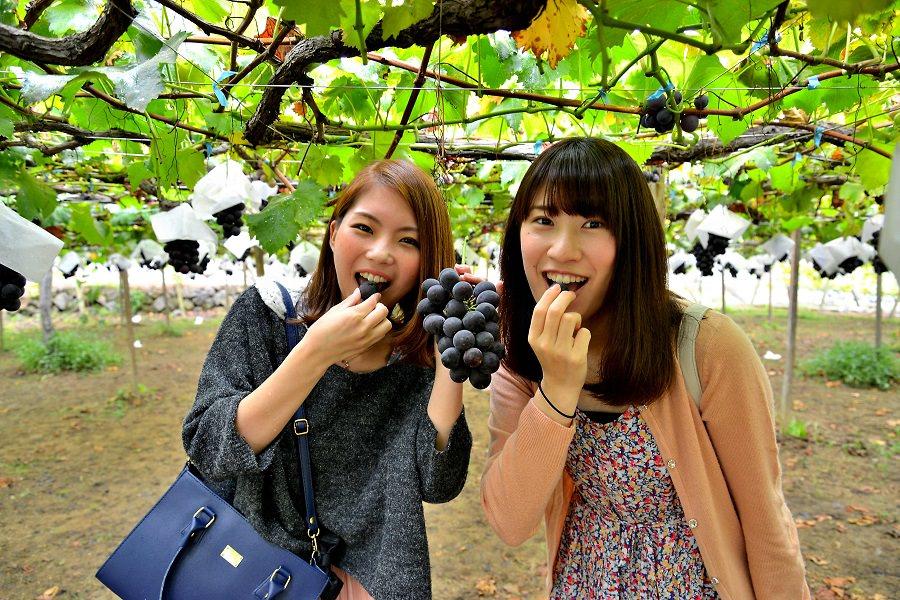 青岛宫家村葡萄让农民增收,感谢政府引导