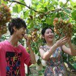 葡萄采摘节与新农村建设