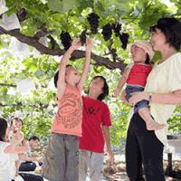 臭氧气体处理对巨峰葡萄的影响