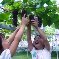 葡萄采摘园如何进行设计规划