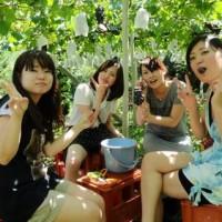 青岛葡萄采摘节的时间特点